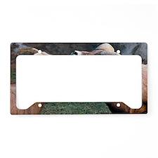 Desert Bighorn Sheep License Plate Holder