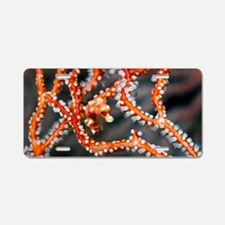 Denise's pygmy seahorse Aluminum License Plate