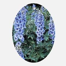 Delphinium 'Blue Dawn' Oval Ornament