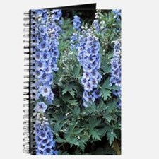 Delphinium 'Blue Dawn' Journal