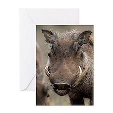 Desert warthog Greeting Card