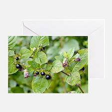Deadly nightshade (Atropa belladonna Greeting Card