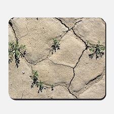 Desert rockcress (Sibara deserti) Mousepad