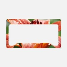Daurian lily (Lilium dauricum License Plate Holder