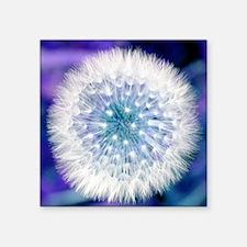 "Dandelion seed head Square Sticker 3"" x 3"""
