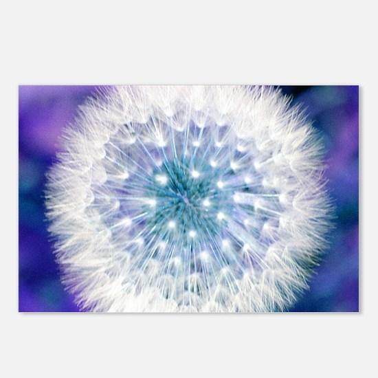 Dandelion seed head Postcards (Package of 8)