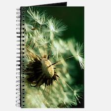 Dandelion clock Journal