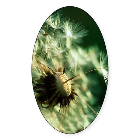 Dandelion clock Sticker (Oval)