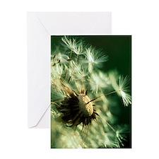 Dandelion clock Greeting Card