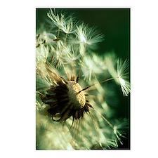 Dandelion clock Postcards (Package of 8)