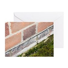 Damp-proofing in a house Greeting Card
