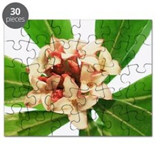 Daphne odora 'Aurea Marginata' Puzzle