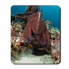 Day octopus Mousepad