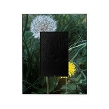 Dandelion (Taraxacum officinale) Picture Frame