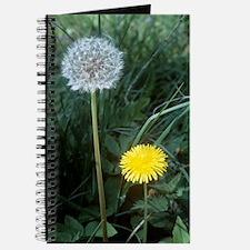 Dandelion (Taraxacum officinale) Journal