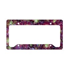 Dudleya, a large exotic succu License Plate Holder