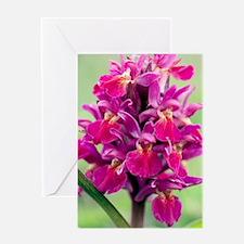 Dactylorhiza sambucina orchid Greeting Card