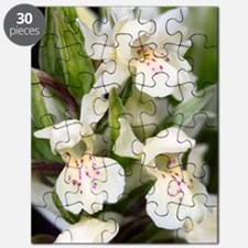 Dactylorhiza sambucina Puzzle