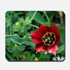 Cypriot tulip flower (Tulipa cypria) Mousepad