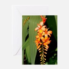 Crocosmia inflorescence Greeting Card