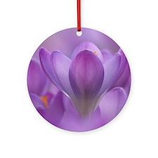 Crocus tommasinianus flowers Round Ornament