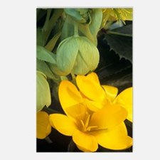 Crocus and Helleborous 'W Postcards (Package of 8)