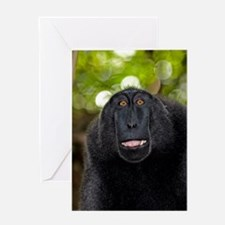 Crested black macaque lipsmacking Greeting Card