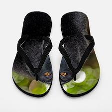 Crested black macaque lipsmacking Flip Flops