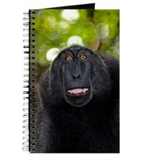 Crested black macaque lipsmacking Journal