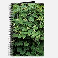 Cretan bryony (Bryonia cretica dioica) Journal