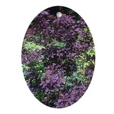 Cotinus coggygria 'Royal Purple' Oval Ornament