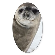 Crabeater seal Decal