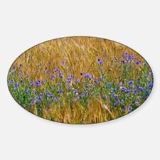 Cornflowers (Centaurea cyanus) Sticker (Oval)