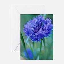 Cornflower (Centaurea 'Blue Ball') Greeting Card