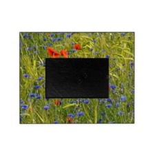 Cornfield meadow in France Picture Frame