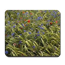 Cornfield meadow in France Mousepad