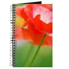 Corn poppies (Papaver rhoeas) Journal