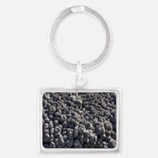 Coral uplifted by volcanic acti Landscape Keychain