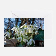 Common snowdrops (Galanthus nivalis) Greeting Card