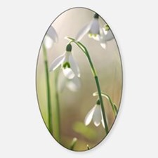 Common snowdrop (Galanthus nivalis) Sticker (Oval)