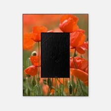 Common poppies (Papaver rhoeas) Picture Frame