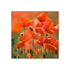 "Common poppies (Papaver rho Square Sticker 3"" x 3"""