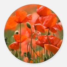 Common poppies (Papaver rhoeas) Round Car Magnet