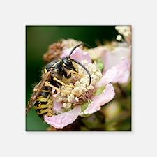 "Common wasp feeding on a fl Square Sticker 3"" x 3"""