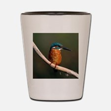 Common kingfisher on a branch Shot Glass