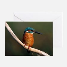 Common kingfisher on a branch Greeting Card