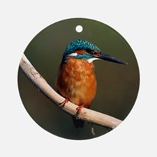 Common kingfisher on a branch Round Ornament