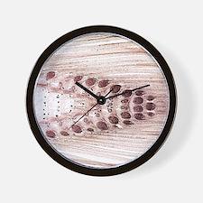 Common horsetail stem, light micrograph Wall Clock
