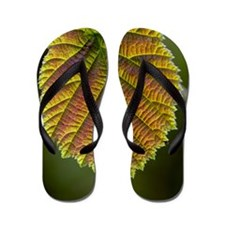 Common hazel leaf Flip Flops