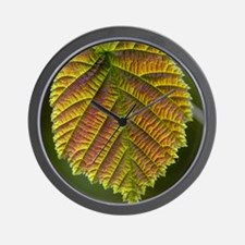 Common hazel leaf Wall Clock